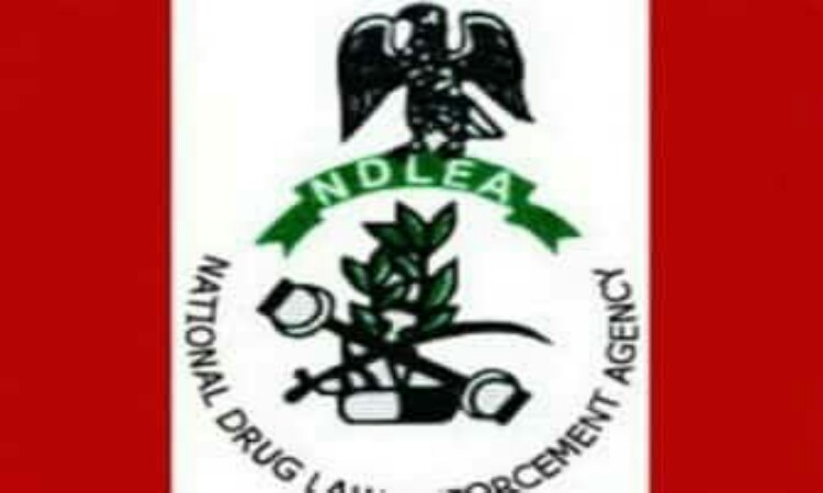 NDLEA Impounds 61.24 Kg Of Narcotics In Jigawa